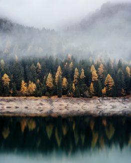Lake Forest Mist