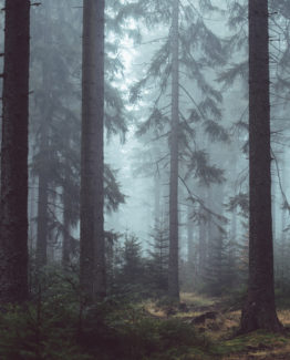 Misty Forest (3)