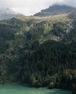 Mountain Forest Coast