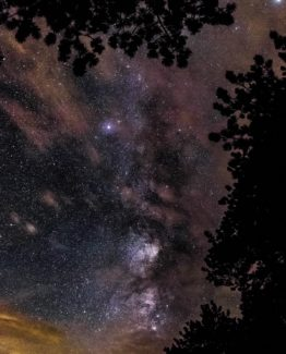 Night Sky Forest Stars